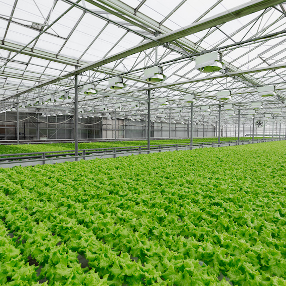 Culture hydroponique en serres - Hydroponic greenhouse farming